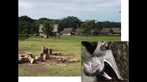 some rabies patients live to tell the tale science aaas in latin america vampire bats sp rabies by biting humans but at least in some people in vian villages such as truenococha this seems to have led