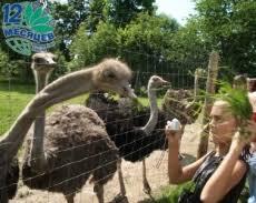 <b>Экскурсии на страусиную ферму</b> — туроператор 12 месяцев