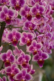 day orchid decor:
