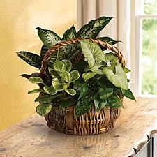 Emerald Garden Basket - Teleflora