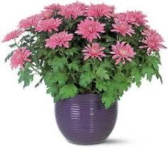 Image result for گل زیبای  گلخانه ای لایه باز