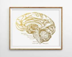 human anatomy print brain print human brain medical poster doctor print home office print modern office print scientific poster anatomy home office