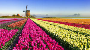 The Real Story Behind the 17th-Century '<b>Tulip</b> Mania' Financial Crash