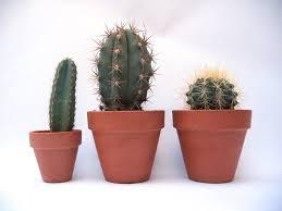 Free <b>cactus</b> Stock Photo - FreeImages.com