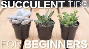 <b>Succulent</b> Tips for Beginners // Garden Answer - YouTube