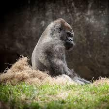 Gorilla's Playthrough