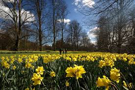 daffodils i wandered lonely as a cloud f f info