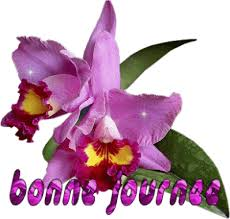 """Résultat de recherche d'images pour """"bon vendredi les orchidées"""""""
