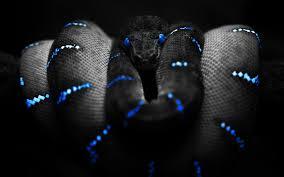 blue enigma desktop for 18 snake