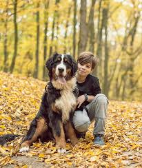 10 Large <b>Dog</b> Breeds That Are Gentle | Mom.com
