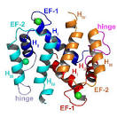s100 proteins