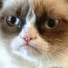 angry cat asshole - caption | Meme Generator via Relatably.com
