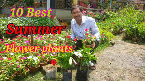 10 Best <b>Summer flower</b> Plants You would love to Purchase from ...