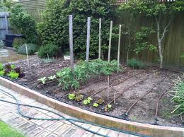 Small Picture Watering Vegetable Gardens Sustainable Gardening Australia