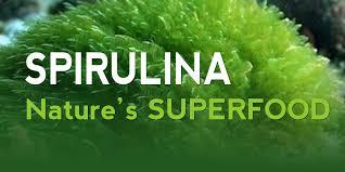 Resultado de imagen de spirulina