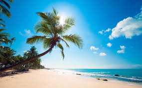 Image result for palm tree on a beach