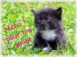 """Résultat de recherche d'images pour """"des photo  de chat merci"""""""