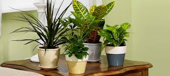 Image result for image house plant