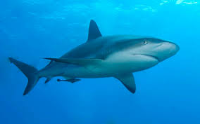 Image result for sharks