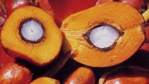 Image result for CRUDE PALM OIL