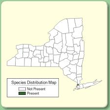 Zygophyllum fabago - Species Page - NYFA: New York Flora Atlas
