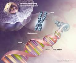 essay on cloning and genetic engineering examples and sample essay on genetic engineering genetic