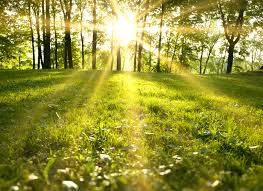 Image result for sunlight