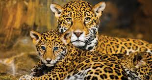 <b>Rainforest</b> Trust Saves <b>Rainforest</b> - Donate Now to Save Species