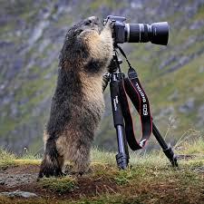 Sizde Kameraya El Sallayın