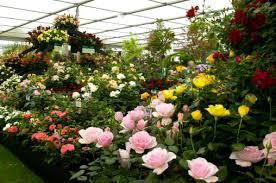 Resultado de imagen para cosecha de flores jardines