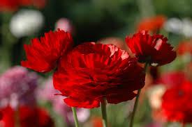 ازهار الربيع images?q=tbn:ANd9GcQ