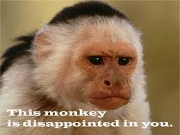 This monkey is disappointed in you. - Meme Collection via Relatably.com