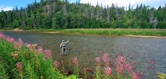 <b>Alaska</b> - <b>Wild Salmon</b> Center