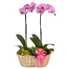 <b>Cute Flowers</b> & Gifts: Santa Clara, CA Same-Day Flower Delivery ...