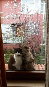 Pin by Лилу on life of windows | Crazy cats, Cats, <b>Cool cats</b>