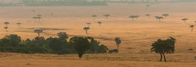 Resultado de imagen de savanna dry season