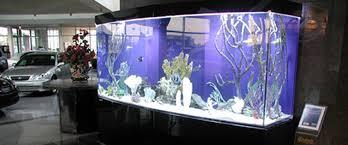 the 10 best aquariums for your office aquarium office