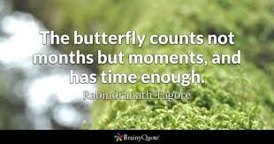 <b>Butterfly Quotes</b> - BrainyQuote