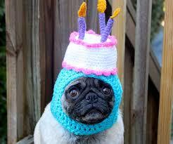 <b>Silly Dog Hats</b>