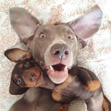 Bilderesultat for dogs taking selfies