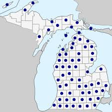Schoenoplectus pungens - Michigan Flora
