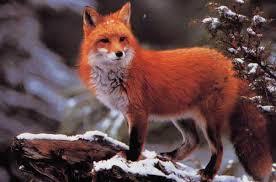 """Résultat de recherche d'images pour """"image animaux sauvage"""""""