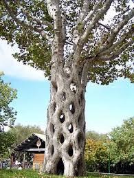 Čudno i usamljeno drveće - Page 12 Images?q=tbn:ANd9GcQfy0_qvqGJbaUxftGsnUqw8JTCj6-1Frb1mZgWnZFHAZK9qgca