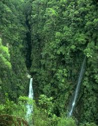 What is a <b>Rainforest</b>?