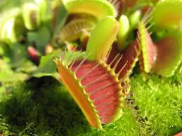 Image result for Venus Fly Trap Jigsaw Puzzle