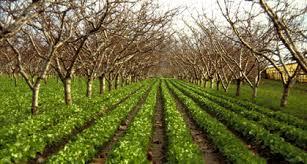 Agroforesterie dans environnement