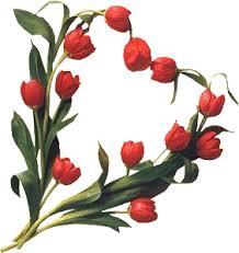 Résultats de recherche d'images pour «tulipe rouge»