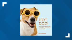 The Summer Season Brings Hot Dogs and <b>Cool Cats</b> | wtol.com