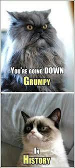 Grumpy cat! on Pinterest   Angry Cat, Grumpy Cat Meme and Grumpy ... via Relatably.com
