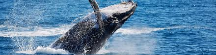 <b>Have A Whale Of</b> A Time | Ingenia Holidays